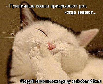 Кот прикрывает рот