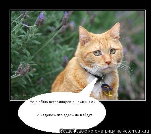 Котоматрица: Не люблю ветеринаров с ножницами... И надеюсь что здесь не найдут...