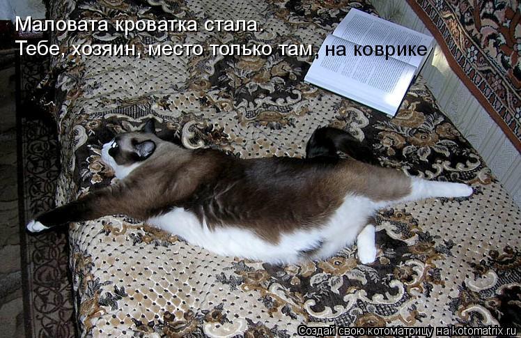Котоматрица: Маловата кроватка стала. Тебе, хозяин, место только там,  , на коврике