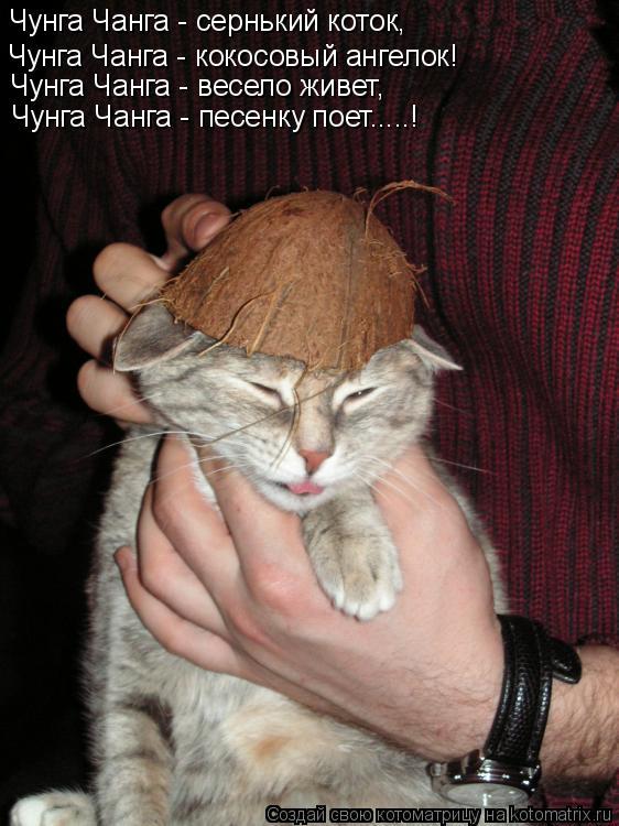 Котоматрица: Чунга Чанга - сернький коток, Чунга Чанга - кокосовый ангелок! Чунга Чанга - весело живет, Чунга Чанга - песенку поет.....!
