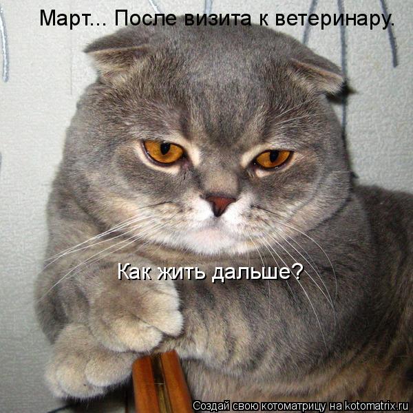 Котоматрица: Март... После визита к ветеринару. Как жить дальше?