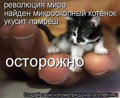Котоматрица: революция мира найден микроскопный котёнок осторожно укусит помрёш