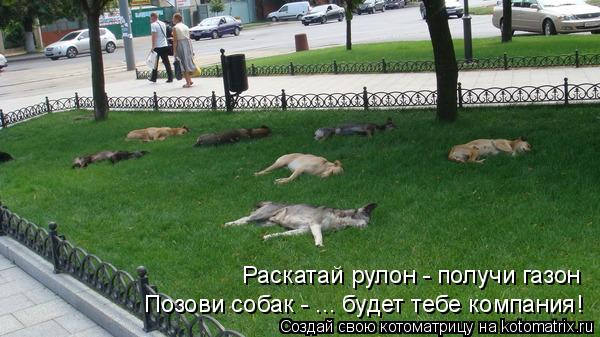 Котоматрица: Раскатай рулон - получи газон Позови собак - ... будет тебе компания!