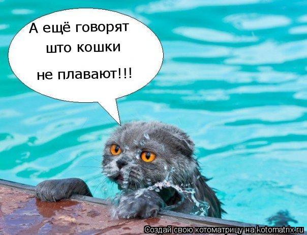 Котоматрица: А ещё говорят  не плавают!!! што кошки