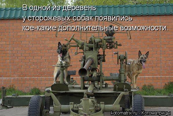 Котоматрица: у сторожевых собак появились В одной из деревень кое-какие дополнительные возможности.