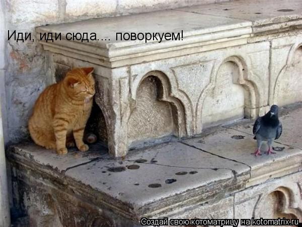 Котоматрица: Иди, иди сюда.... поворкуем!