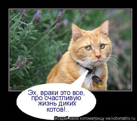 Котоматрица: Эх, враки это все, про счастливую  жизнь диких котов!..