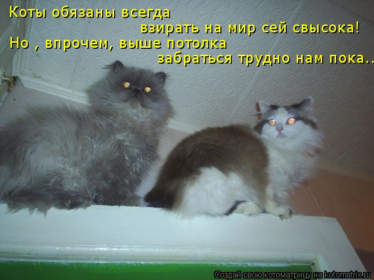 Котоматрица: Коты обязаны всегда взирать на мир сей свысока! Но , впрочем, выше потолка забраться трудно нам пока...