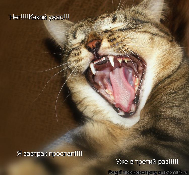 Котоматрица: Нет!!!!Какой ужас!!!  Я завтрак проспал!!!! Уже в третий раз!!!!!