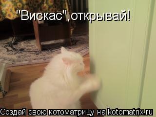"Котоматрица: ""Вискас"",открывай!"