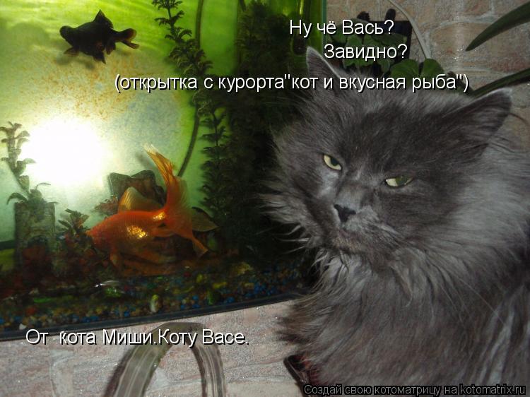 """Котоматрица: Ну чё Вась? Завидно? (открытка с курорта""""кот и вкусная рыба"""") От  кота Миши.Коту Васе."""