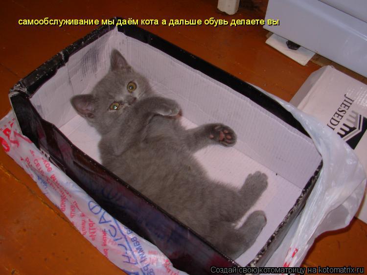 Котоматрица: самообслуживание мы даём кота а дальше обувь делаете вы