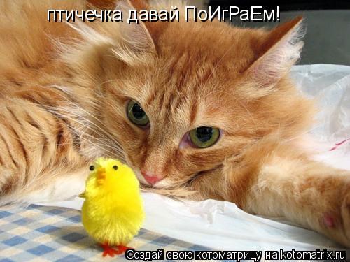 Котоматрица: птичечка давай ПоИгРаЕм!