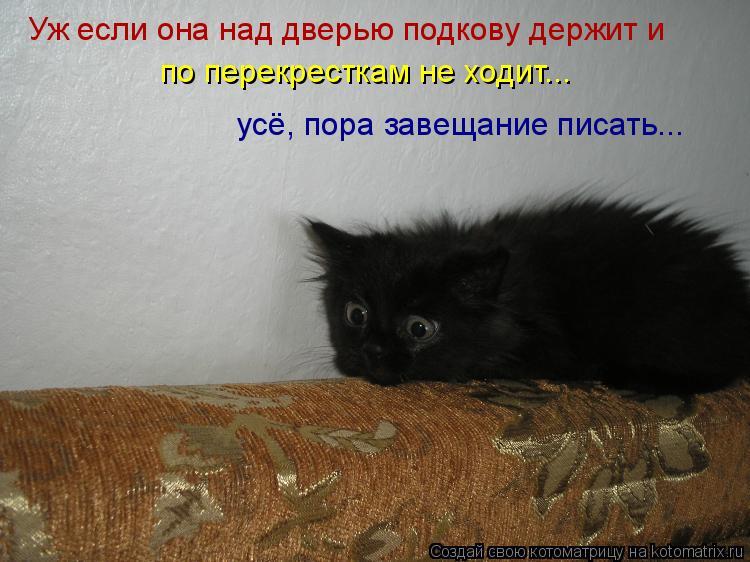 Котоматрица: Уж если она над дверью подкову держит и по перекресткам не ходит... усё, пора завещание писать...