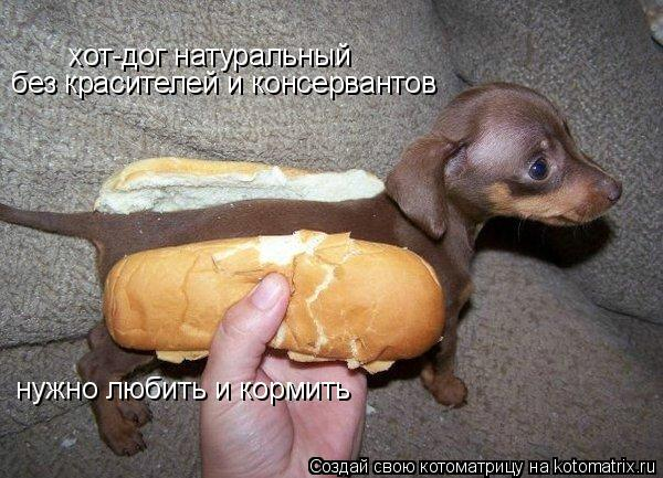 Котоматрица: хот-дог натуральный без красителей и консервантов нужно любить и кормить