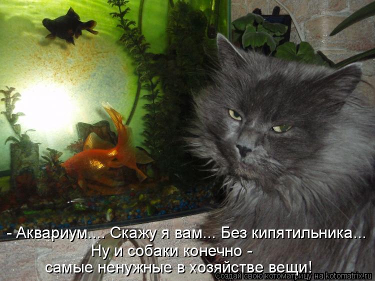 Котоматрица: - Аквариум.... Скажу я вам... Без кипятильника... Ну и собаки конечно - самые ненужные в хозяйстве вещи!