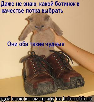 Котоматрица: Даже не знаю, какой ботинок в  качестве лотка выбрать Они оба такие чудные