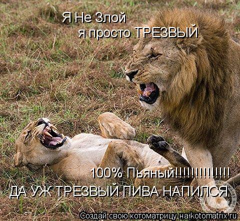 Котоматрица: Я Не Злой я просто ТРЕЗВЫЙ  ДА УЖ ТРЕЗВЫЙ ПИВА НАПИЛСЯ  100% Пьяный!!!!!!!!!!!!!!