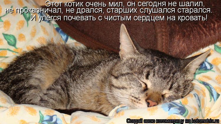 Котоматрица: Этот котик очень мил,  он сегодня не шалил,  не проказничал, не дрался, старших слушался старался. И улёгся почевать с чистым сердцем на крова