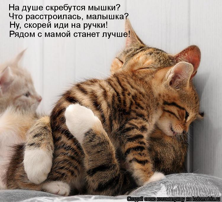 Котоматрица: На душе скребутся мышки? Что расстроилась, малышка? Ну, скорей иди на ручки! Рядом с мамой станет лучше!
