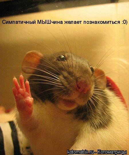 Котоматрица: Симпатичный МЫШчина желает познакомиться :0)