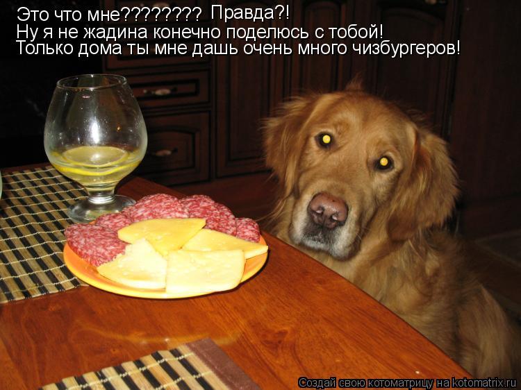 Котоматрица: Это что мне???????? Правда?! Ну я не жадина конечно поделюсь с тобой! Только дома ты мне дашь очень много чизбургеров!