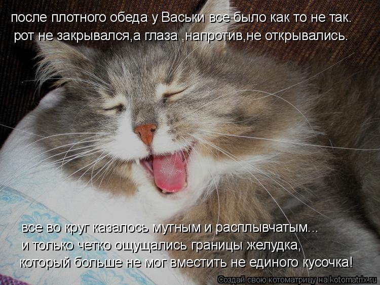 Котоматрица: после плотного обеда у Васьки все было как то не так. рот не закрывался,а глаза ,напротив,не открывались. все во круг казалось мутным и распл