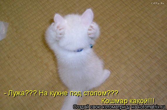 Котоматрица: - Лужа??? На кухне под столом??? Кошмар какой!!!