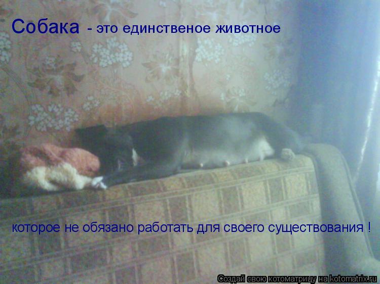 Котоматрица: Собака - это единственое животное которое не обязано работать для своего существования !  которое не обязано работать для своего существов