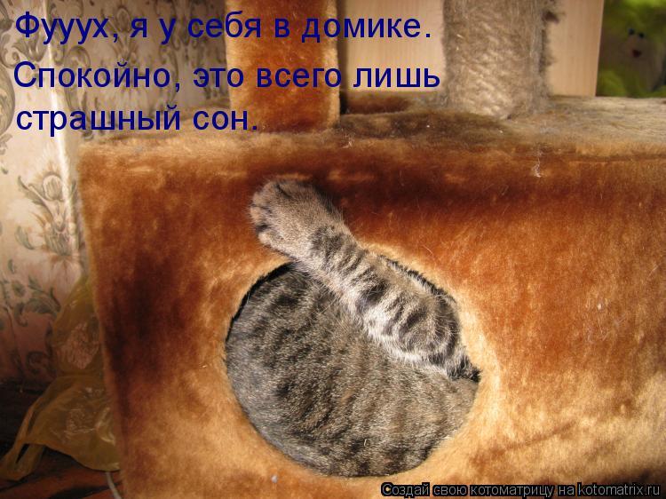 Котоматрица: Фууух, я у себя в домике.  Спокойно, это всего лишь  страшный сон.