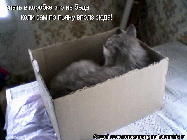 Котоматрица: спать в коробке это не беда, коли сам по пьяну вполз сюда спать в коробке это не беда, коли сам по пьяну вполз сюда спать в коробке это не беда