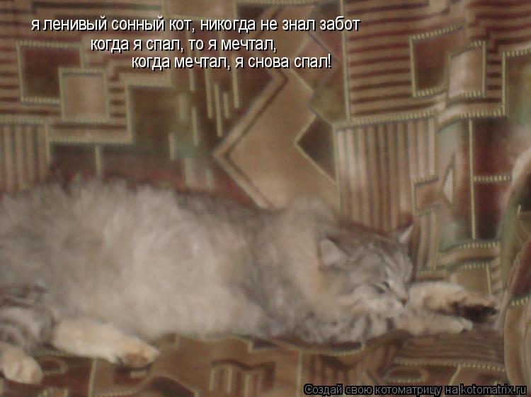 Котоматрица: я ленивый сонный кот, никогда не знал забот когда я спал, то я мечтал, когда мечтал, я снова спал!