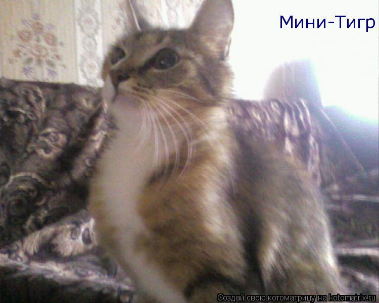 Котоматрица: Мини-Тигр