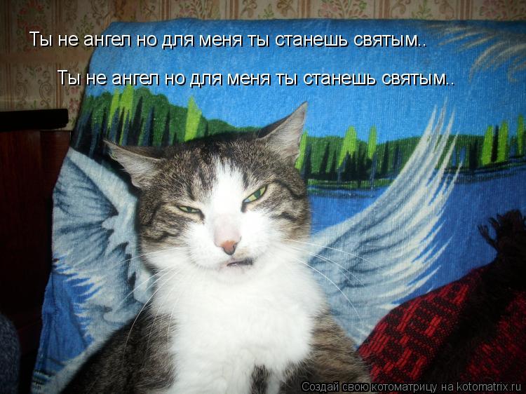 Котоматрица: Ты не ангел но для меня ты станешь святым.. Ты не ангел но для меня ты станешь святым..