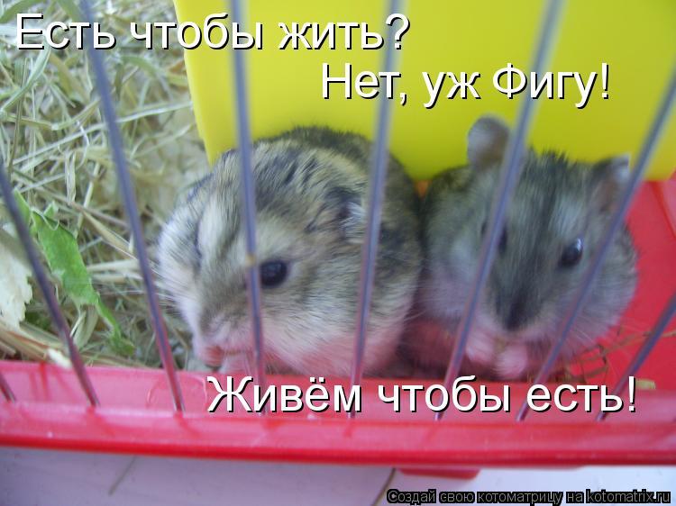 Котоматрица: есть чтобы жить? Есть чтобы жить? Нет, уж Фигу!  Живём чтобы есть!