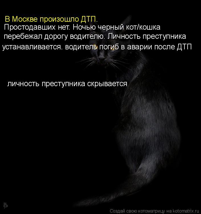 Котоматрица: В Москве произошло ДТП. Простодавших нет. Ночью черный кот/кошка  перебежал дорогу водителю. Личность преступника устанавливается. водител