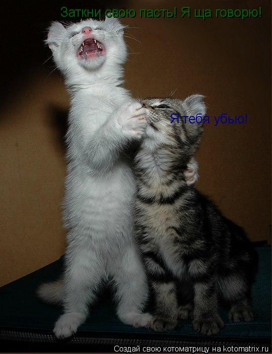 Котоматрица: Заткни свою пасть! Я ща говорю! Я тебя убью!