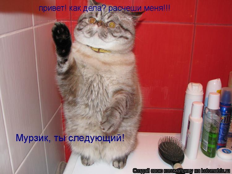 Котоматрица: привет! как дела? расчеши меня!!! Мурзик, ты следующий!