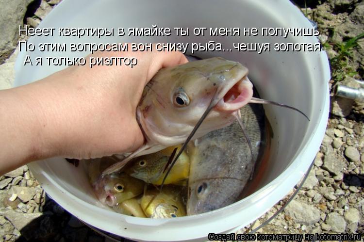 Котоматрица: Нееет квартиры в ямайке ты от меня не получишь По этим вопросам вон снизу рыба...чешуя золотая А я только риэлтор