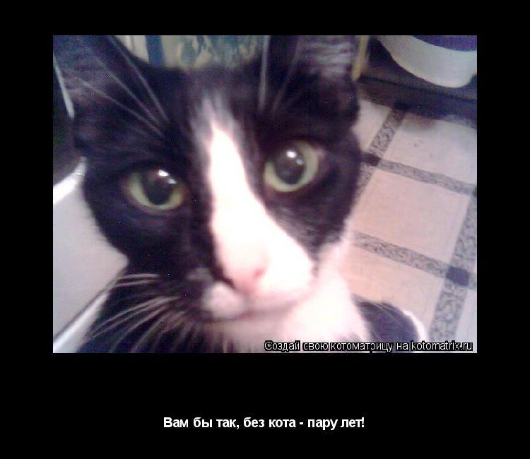 Котоматрица: Оголодала Вам бы так, без кота - пару лет!