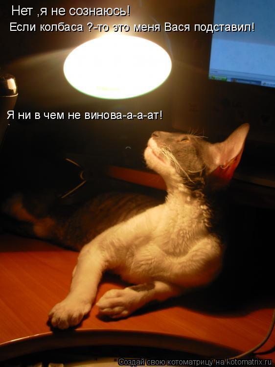 Котоматрица: Нет ,я не сознаюсь! Если колбаса ?-то это меня Вася подставил! Я ни в чем не винова-а-а-ат!