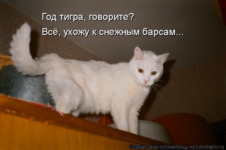 Котоматрица: Год тигра, говорите? Всё, ухожу к снежным барсам...