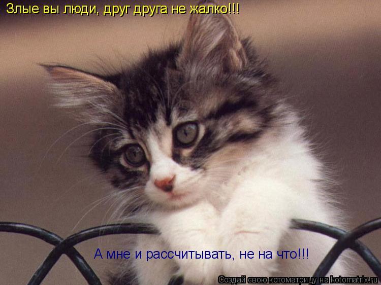 Котоматрица: Злые вы люди, друг друга не жалко!!!  А мне и рассчитывать, не на что!!!