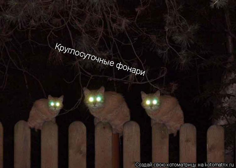 Котоматрица: Круглосуточные фонари