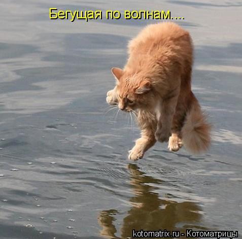 Котоматрица: Бегущая по волнам....