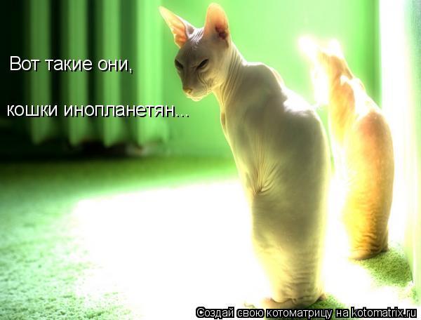 Котоматрица: Вот такие они, кошки инопланетян...