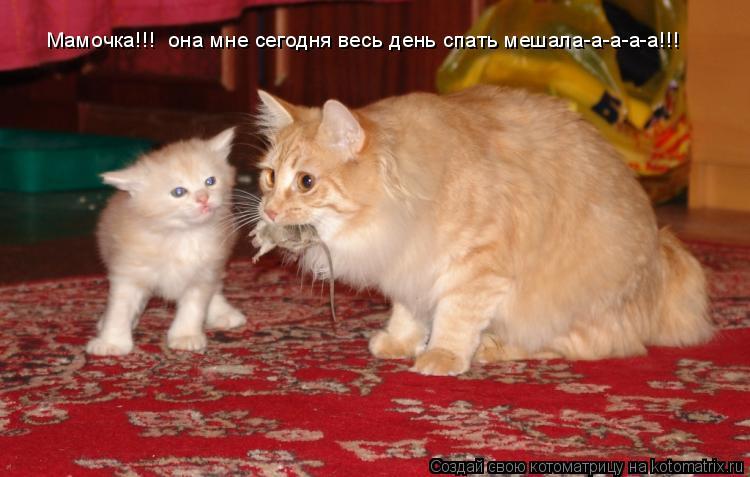 Котоматрица: Мамочка!!!  она мне сегодня весь день спать мешала-а-а-а-а!!!