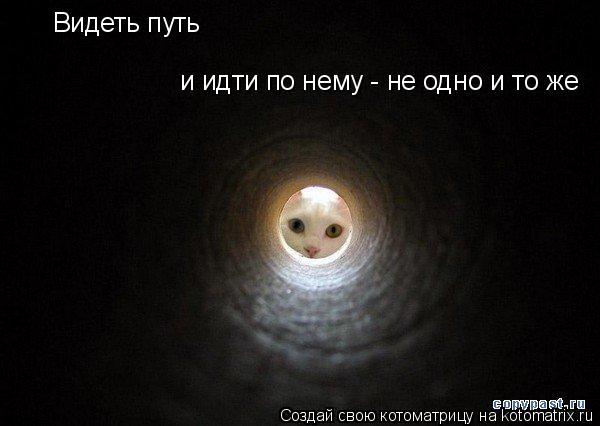 Котоматрица: Видеть путь и идти по нему - не одно и то же