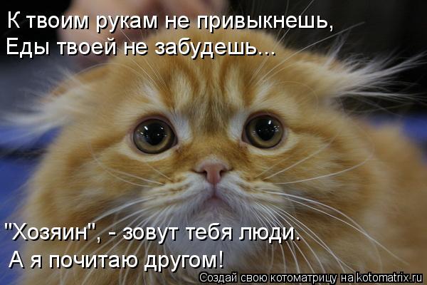 """Котоматрица: К твоим рукам не привыкнешь, Еды твоей не забудешь... """"Хозяин"""", - зовут тебя люди. А я почитаю другом!"""