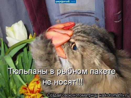 Котоматрица: Тюльпаны в рыбном пакете  не носят!!!